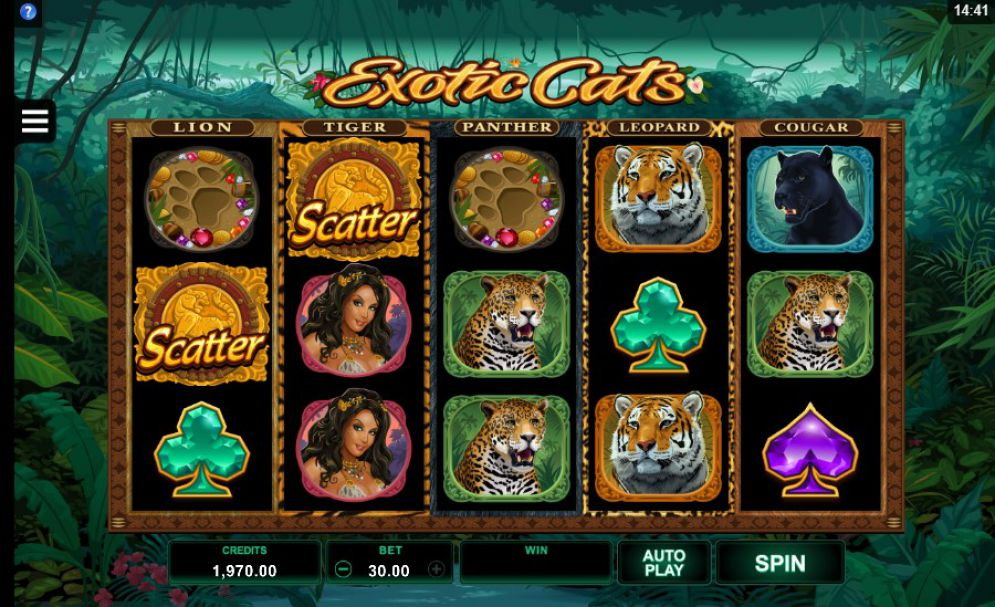 Exotic Cats Slots Game